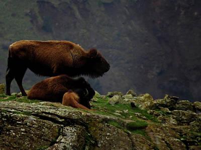 Photograph - Bison Rest by Jacqueline  DiAnne Wasson