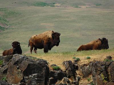 Photograph - Bison Ridge by Jacqueline  DiAnne Wasson