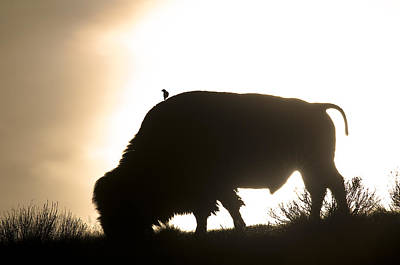 Bison Digital Art - Bison Silhouette by Earl Nelson