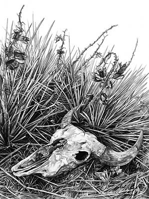 New Mexico Drawing - Bison Skull by Aaron Spong