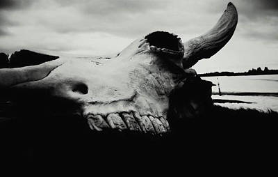Photograph - Bison Skull Black White by 'REA' Gallery