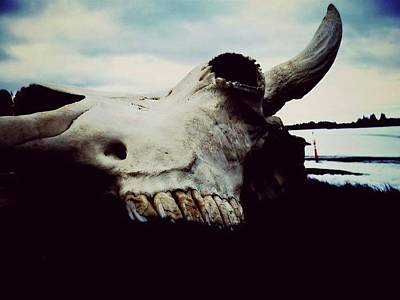 Photograph - Bison Skull by 'REA' Gallery