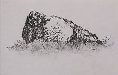Drawing - Bison by Stacy Williams