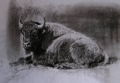 Yellowstone Drawing - Bison Study by Susie Gordon