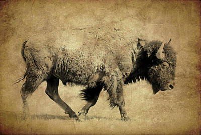 Photograph - Bison Walk Textured by Athena Mckinzie