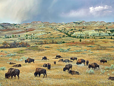 Photograph - Bisons by Tim Fitzharris