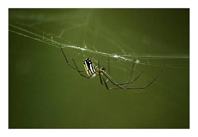 Bitsy Photograph - Bitsy Spider by W Scott Morrison