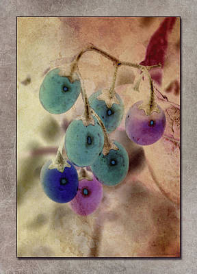 Photograph - Bitter Berries by WB Johnston