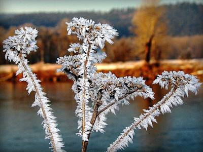Photograph - Bitterroot Frost by Leah Grunzke