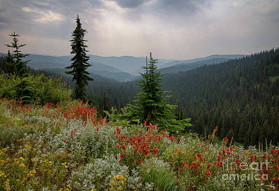 Photograph - Bitterroot Summer by Idaho Scenic Images Linda Lantzy