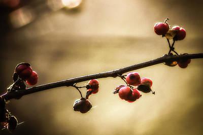 Bittersweet Berries Art Print