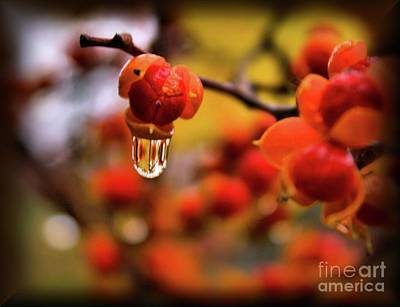 Bittersweet Photograph - Bittersweet Berries by Robin Ayers
