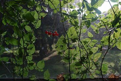 Solanum Dulcamara Photograph - Bittersweet by Paul Borden