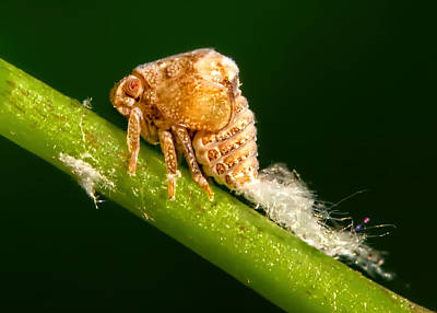 Photograph - Bizarre Bug by Carolyn Derstine
