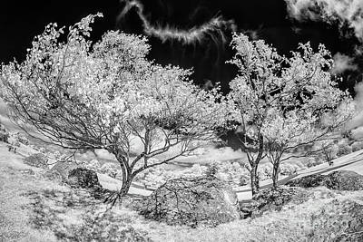 Photograph - Bizarre Trees And Rocks In The Blue Ridge Bw by Dan Carmichael