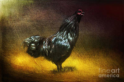 Painting - Black Ameracauna Coltyn's Rooster  by Christina VanGinkel
