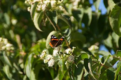 Photograph - Black And Orange Butterfly by Toni Berry