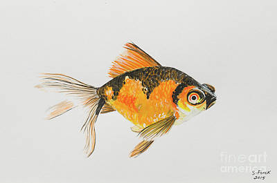 Painting - Black And Orange Goldfish by Stefanie Forck