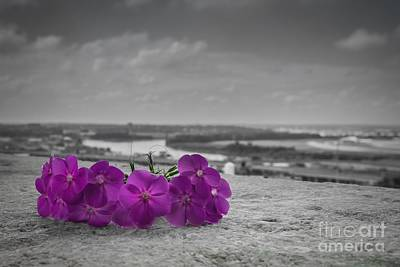 Photograph - Black And White And Purple by Lisa Plymell
