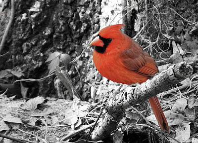 Photograph - Black And White And Red by Judy Wanamaker