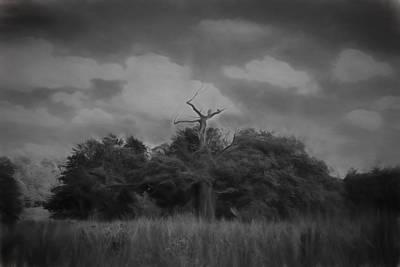 Black Top Digital Art - black and white artistic Oak by Leif Sohlman