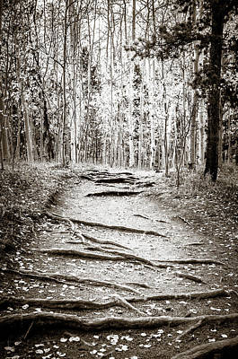 Photograph - Black And White Aspen Trail by Marilyn Hunt