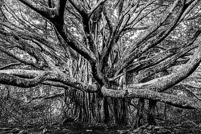 Photograph - Black And White Banyan by Kelley King