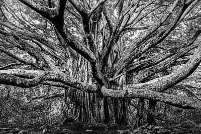 Photograph - Black And White Banyan by Kelley King