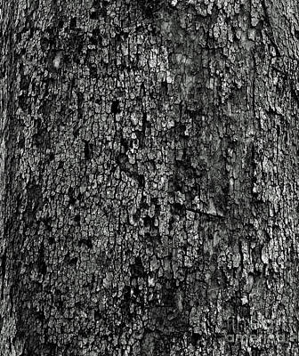 Photograph - Black And White Bark by Karen Adams