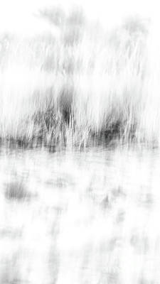 Photograph - Black And White Beach Grass by Alissa Beth Photography