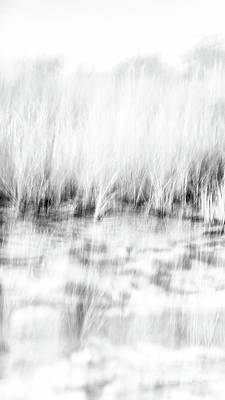 Photograph - Black And White Beach Grass Narrow 3 by Alissa Beth Photography