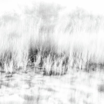 Photograph - Black And White Beach Grass Square by Alissa Beth Photography