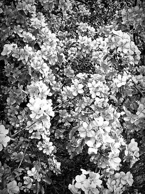 Photograph - Black And White Beautiful Blossoms by Aimee L Maher Photography and Art Visit ALMGallerydotcom
