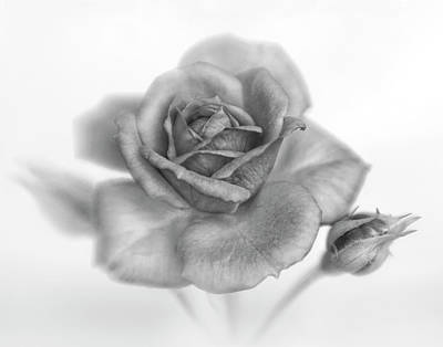 Photograph - Black And White Beauty by David and Carol Kelly