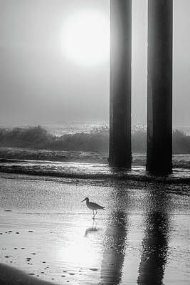 Print featuring the photograph Black And White Bird Beach by John McGraw