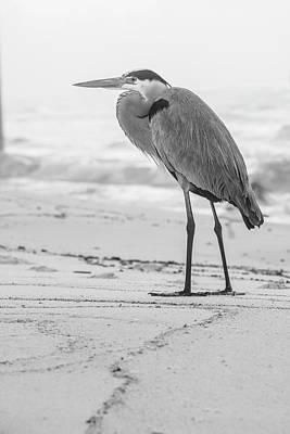 Photograph - Black And White Blue Heron Alabama  by John McGraw