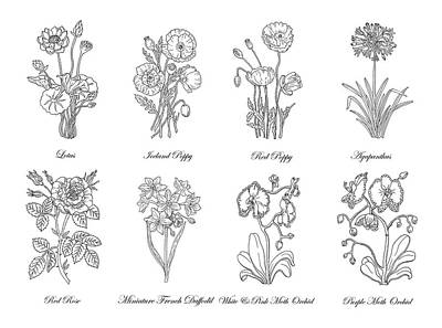Florals Drawings - Black And White Botanical Flowers Drawing by Irina Sztukowski