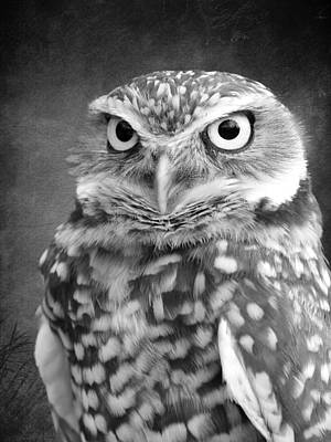 Photograph - Black And White Burrowing Owl by Steve McKinzie