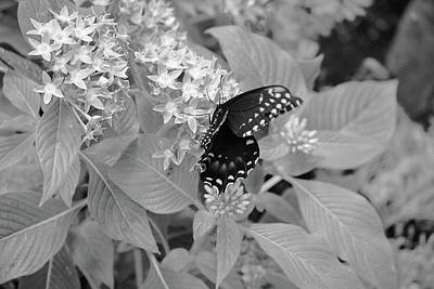 Abstract Male Faces - Black and white butterfly by Mickie Bettez