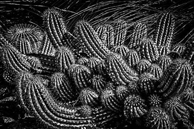 Photograph - Black And White Cactus by Harry Spitz