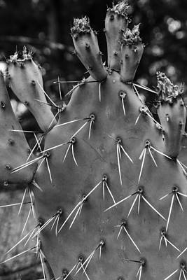 Photograph - Black And White Cactus  by John McGraw