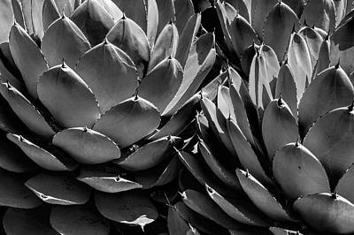 Photograph - Black And White California Cabbage Cactus Agave by Randall Nyhof