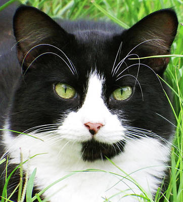 Photograph - Black And White Cat by Cathy Harper