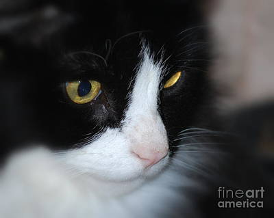 Art Print featuring the photograph Black And White Cat by Lila Fisher-Wenzel