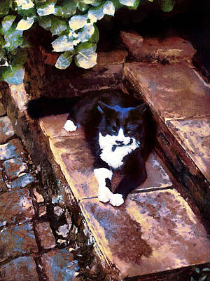 Painting - Black And White Cat Resting Regally by Menega Sabidussi