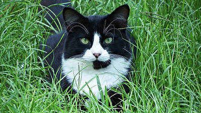 Photograph - Black And White Cat With Green Eyes by Cathy Harper