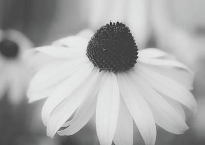 Photograph - Black And White Coneflower Macro by Joni Eskridge