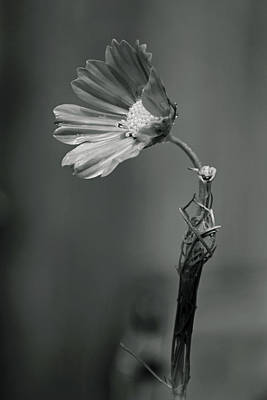 Photograph - Black And White Cosmo by Vanessa Valdes