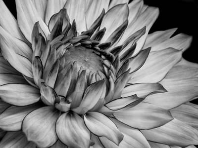 Photograph - Black And White Dahlia  by David and Carol Kelly