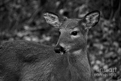 Photograph - Black And White Deer Heart Art by Robyn King